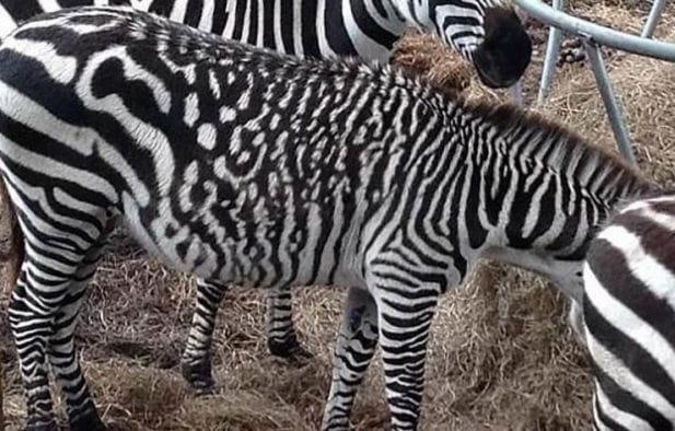 Подборка животных с самым удивительным и необычным окрасом. Только взгляните на ЭТО чудо!