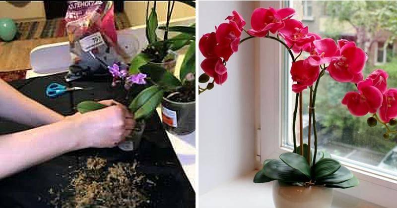 Опыт выращивания орхидей 15